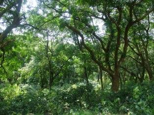 Thanh Hóa: Bảo tồn 2 loài cây quý hiếm