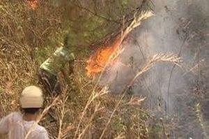 Lâm Đồng: Cháy lớn ở Vườn Quốc gia Biduop – Núi Bà