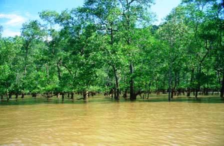 Tăng cường bảo tồn rừng ngập mặn ven biển Bạc Liêu