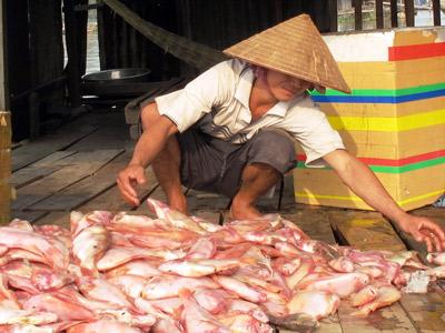 Đồng Nai: Sông La Ngà ngập xác cá