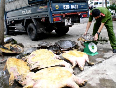 Phát hiện và tịch thu nhiều động vật hoang dã quý hiếm