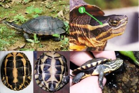 Xây dựng Trung tâm bảo tồn rùa Trung Bộ