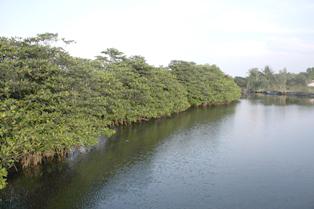 Quản lý thích ứng để bảo tồn và phát triển bền vững ĐBSCL