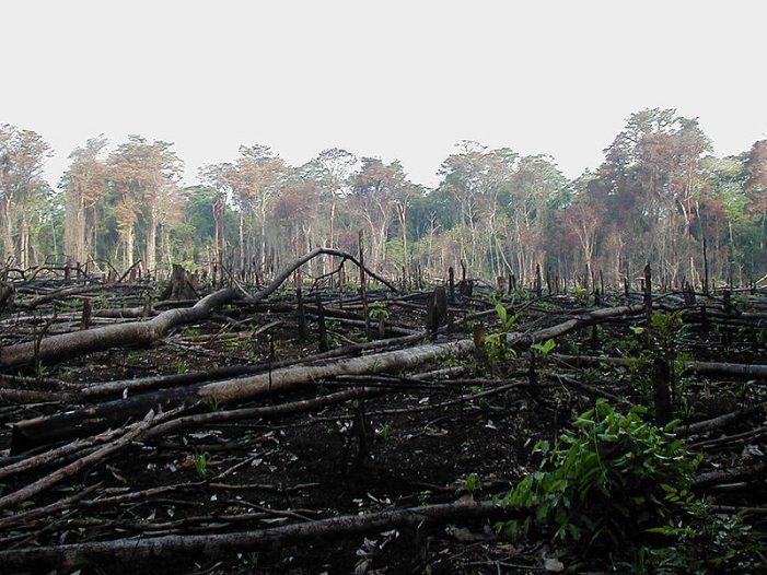Giảm tỷ lệ phá và suy thoái rừng xuống mức 0