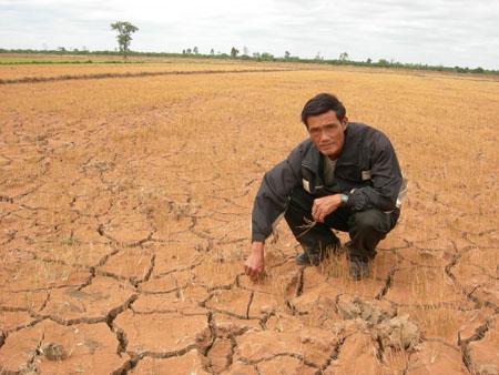 Đắk Lắk: Thiệt hại trên 466 tỷ đồng vì hạn hán