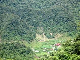 Duyệt kế hoạch đấu thầu dự án về rừng tại 3 tỉnh