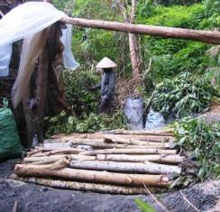 Ngăn chặn nạn phá rừng ở VQG Mũi Cà Mau