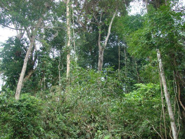 Quy định mới về điều kiện khai thác gỗ rừng tự nhiên