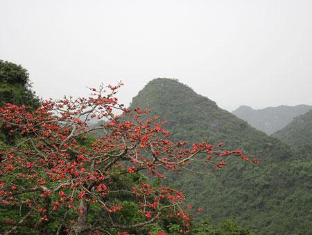 Phát triển cây đặc sản tại rừng đặc dụng Hương Sơn