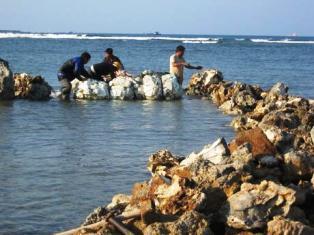 San hô bị tàn phá ở vùng biển giáp ranh Ninh Thuận–Bình Thuận