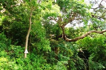 Xây dựng Vườn thực vật thuộc VQG Phước Bình