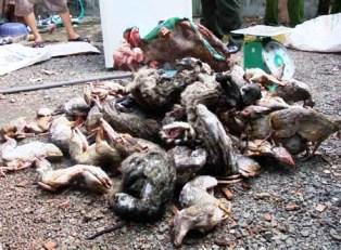 Bình Phước: Một quán ăn bán động vật hoang dã số lượng lớn
