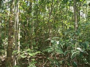 Đồng Nai: Rừng cây gỗ lớn bản địa đang dần khôi phục