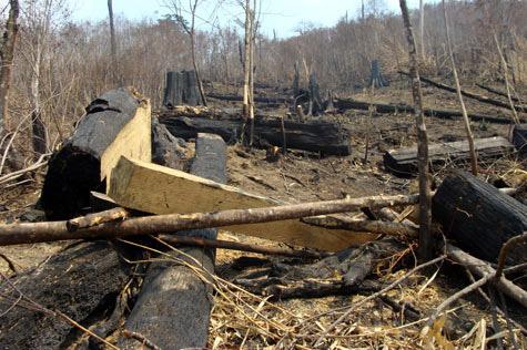 Lũ lại vạch trần nạn phá rừng