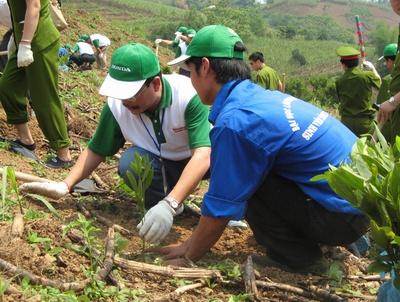 Tuyên Quang nỗ lực hoàn thành trồng rừng trong tháng 8/2011