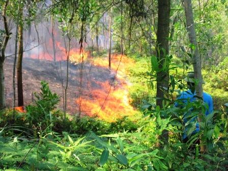 Thanh Hóa lại cháy rừng