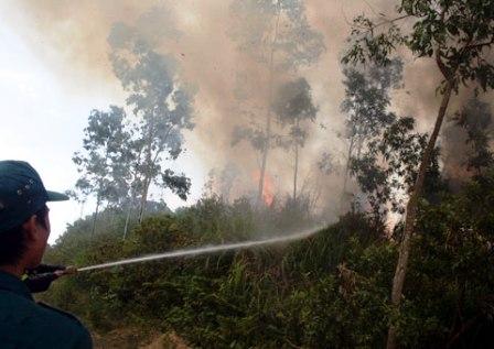 Cháy rừng đặc dụng Hải Vân
