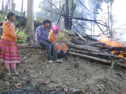 Đắk Lắk: Sắn lấn rừng