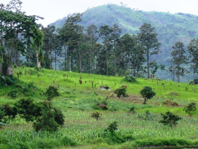Đắk Lắk: rừng giao khoán bị tàn phá