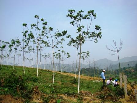 Đắk Lắk: 18 dự án trồng cao su, trồng rừng bị thu hồi