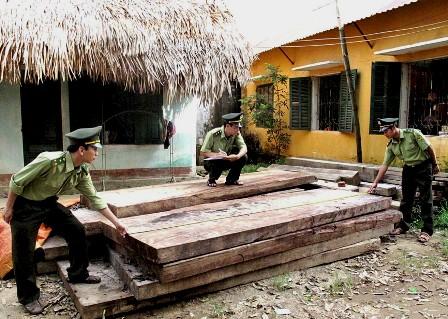 Hà Giang: Rừng nghiến chưa ngừng bị tàn phá