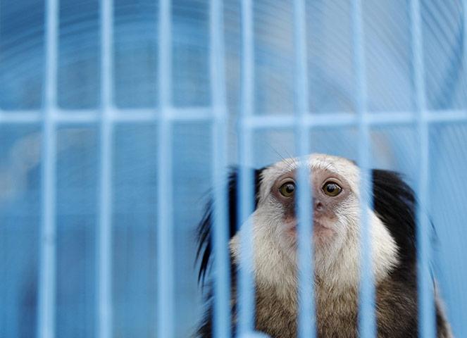 Buôn bán động vật hoang dã tại Bangkok