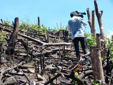 Lợi dụng chính sách để phá rừng