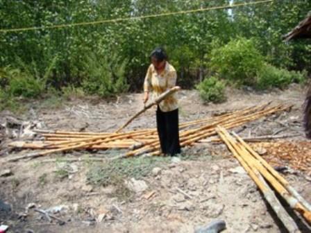 Rừng đước VQG Mũi Cà Mau đang bị biến thành than