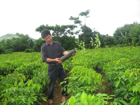 Thanh Hóa: Mất rừng, đất bỏ hoang chờ cao su