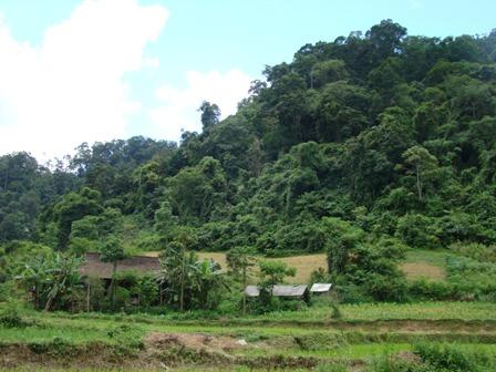 Rừng cộng đồng mở đường cho các công cụ quản lý rừng bền vững