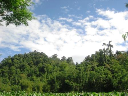 Phú Thọ đầu tư hơn 1.600 tỷ đồng phát triển rừng sản xuất