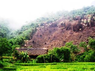 Bình Định: Trồng rừng mất cân đối gây hệ lụy