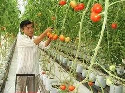 Lâm Đồng đầu tư hơn 2.900 tỷ đồng phát triển nông nghiệp công nghệ cao