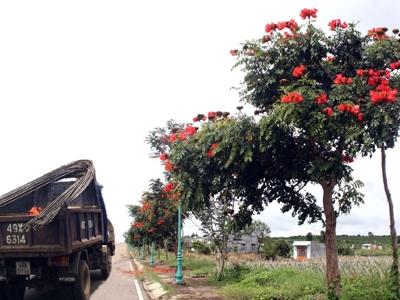 Lâm Đồng trồng cây ngoại lai xâm hại