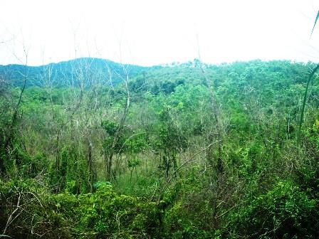 Huế: 90ha rừng trồng và cao su sắp chìm dưới lòng hồ thuỷ điện
