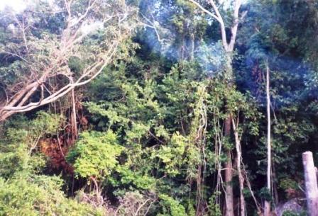 Ninh Thuận xin chuyển đổi đất rừng quốc gia làm đường du lịch