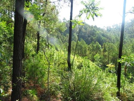Phú Yên đầu tư 1.886 tỷ đồng bảo vệ phát triển rừng 2011-2020