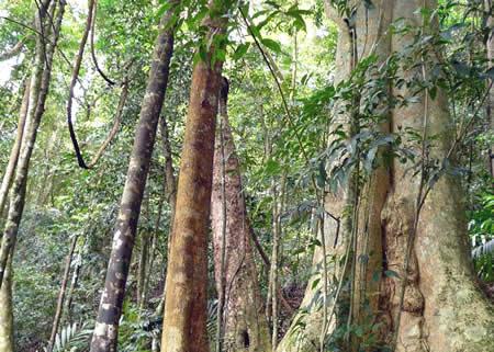 Tây Nguyên và Đông Nam bộ cần ưu tiên bảo vệ rừng