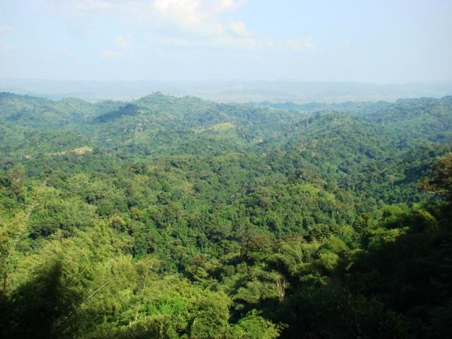 Ngắm rừng nước bạn nghĩ về quê hương