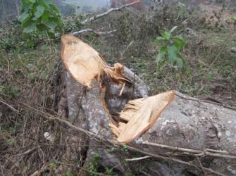 Cách phạt phá rừng mới lạ ở Thừa Thiên Huế