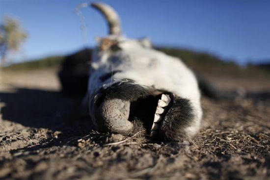 Mexico khô hạn nghiêm trọng nhất trong 70 năm qua