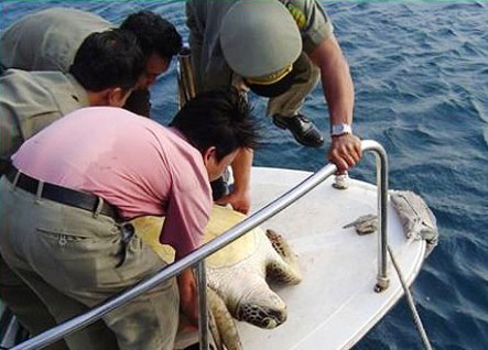Khánh Hòa: Kiến nghị bảo tồn rùa biển