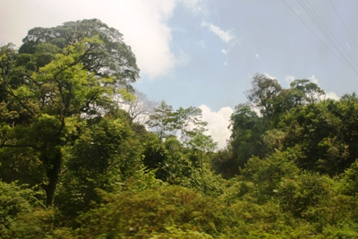 An Giang tạm dừng cấp mới dự án trên đất lâm nghiệp có rừng