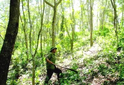 Tăng cường công tác bảo vệ rừng trong năm 2012