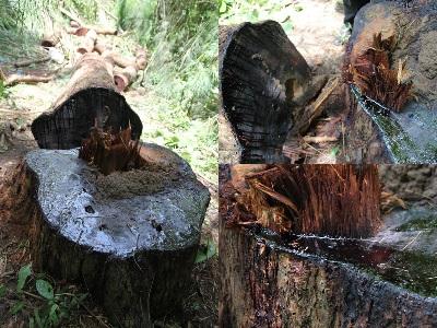 Xác định khu vực rừng trọng điểm cần bảo vệ ở Tây Nguyên