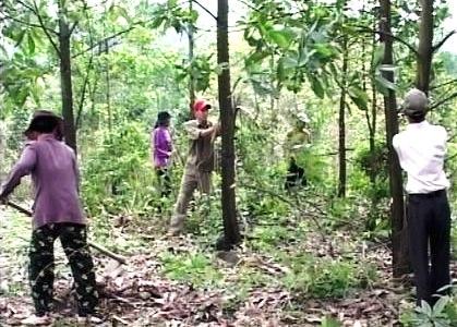 """Biến """"lâm tặc"""" thành người giữ rừng"""