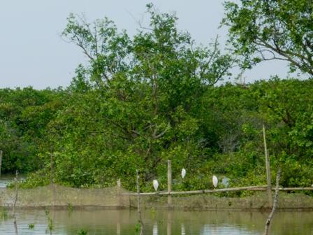 Dự án bảo vệ rừng ngập mặn tại Xuân Thủy nhận 20.000 USD tài trợ