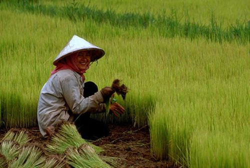 Vựa lúa của Việt Nam đang bị đe dọa nghiêm trọng