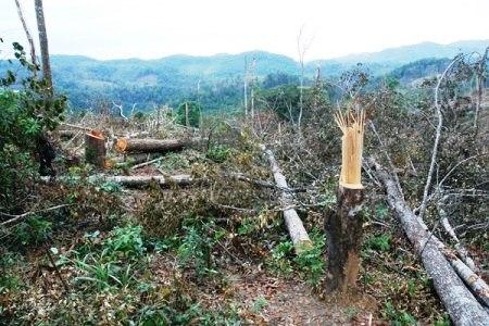 Báo cáo Thủ tướng 3 sự vụ phá rừng tại Huế, Gia Lai và Đắk Nông