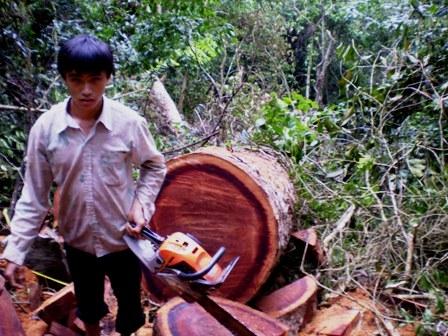 Tàn sát rừng nghiến ở Hà Giang (Kỳ 2)